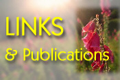 Links and Publications